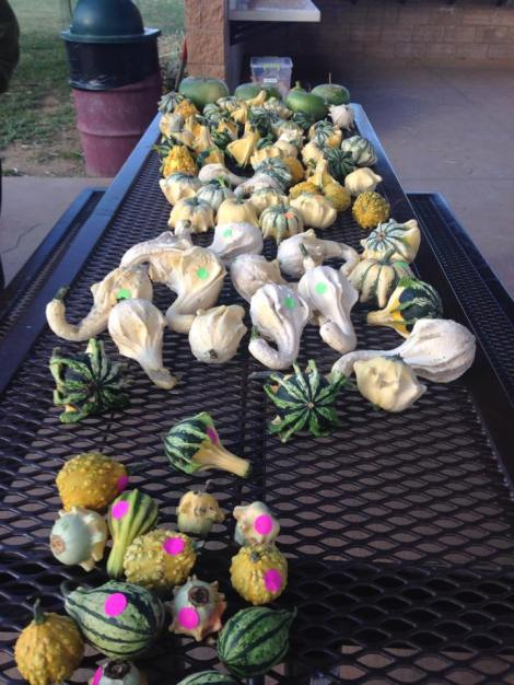 2014Oct11 HF gourds