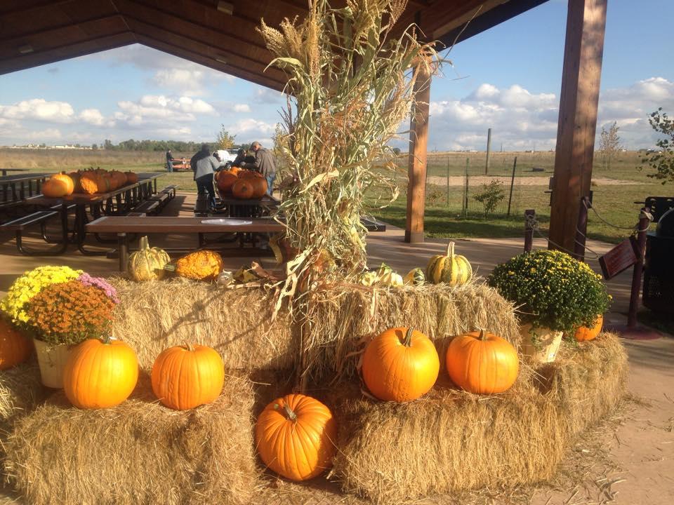 2014Oct11 HF pumpkin display