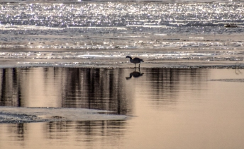 Canada Goose Reflection on the Lake