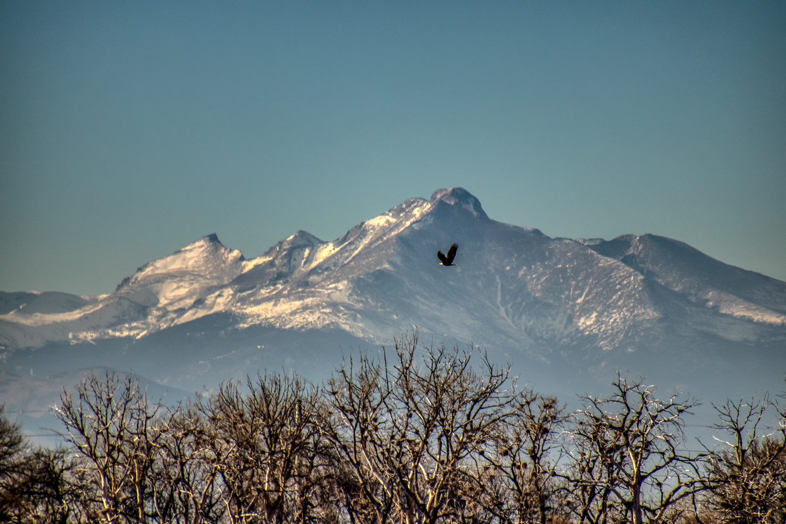 Bald Eagle Soaring Over the Lake with Long's Peak in the Background
