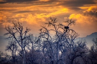 Bald Eagles' Nests at sunset